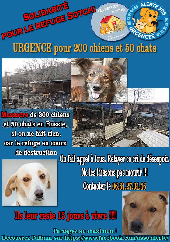 urgence pour 200 chiens et 50 chats  Refuge de Sotchi (Russie) Sotchi10