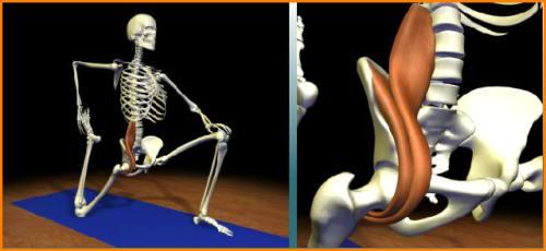 Gymnastique aux agrés (et accessoirement musculation/exercices poids du corps + souplesse) Psoas-10