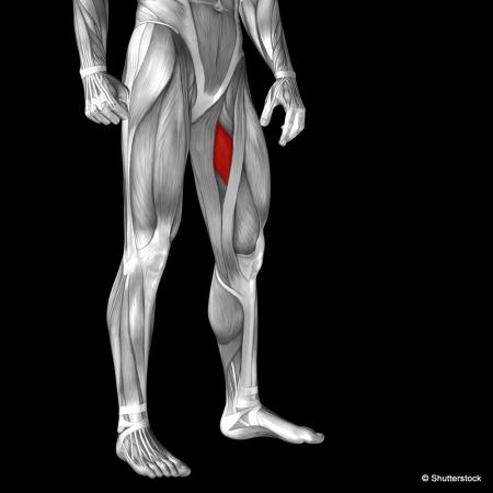 Gymnastique aux agrés (et accessoirement musculation/exercices poids du corps + souplesse) Shutte10