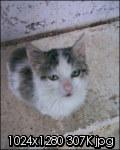 Τι κάνουμε αν βρούμε ένα μωρό γατάκι στο δρόμο - Σελίδα 3 030ea_10