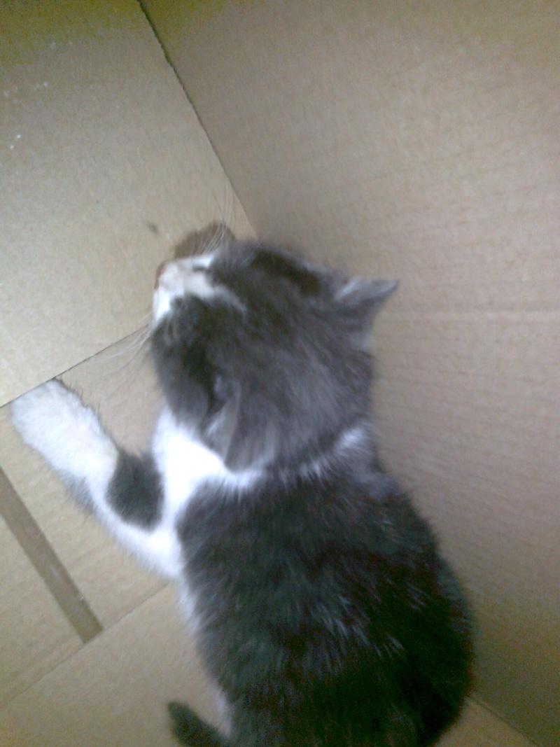 Γατακι με αναπνευστικο προβλημα...  :-(((( Izaiya13