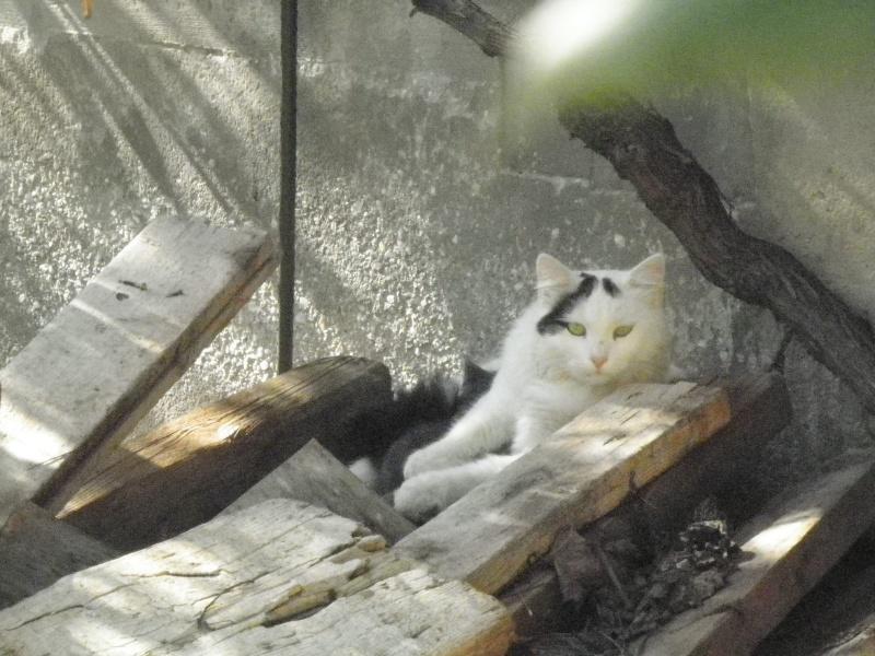 Γατακι με αναπνευστικο προβλημα...  :-(((( Pb190110