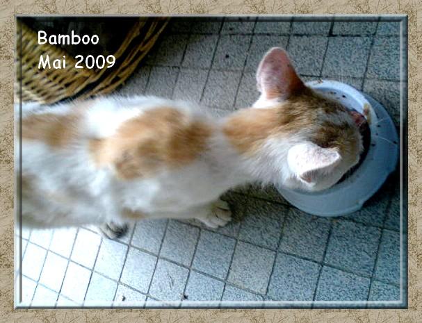 Bamboo, adorable jeune chat roux et blanc sauvé de la rue Dsc00516