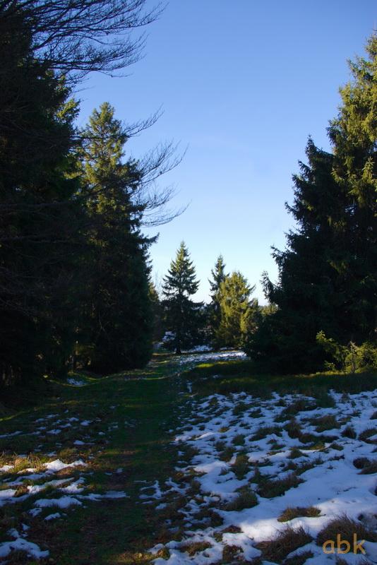 Un bol d' air au Champ du Feu ( 22.11.17 ) Chemin11