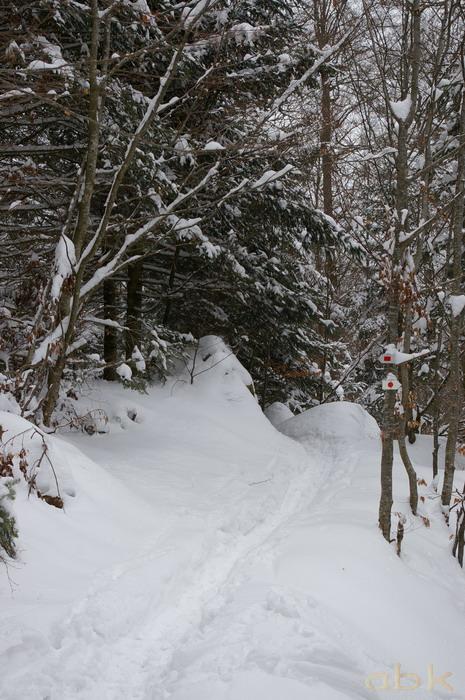Balade dans la neige Imgp2017