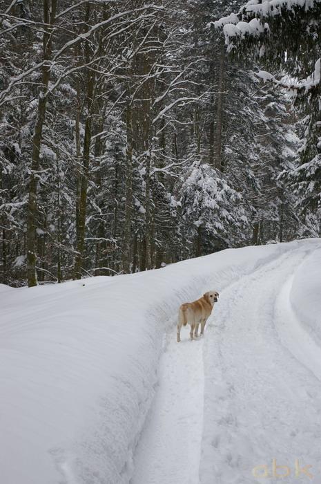 Balade dans la neige Imgp2019