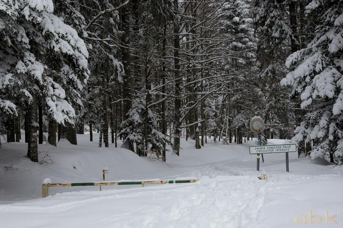 Balade dans la neige Imgp2020