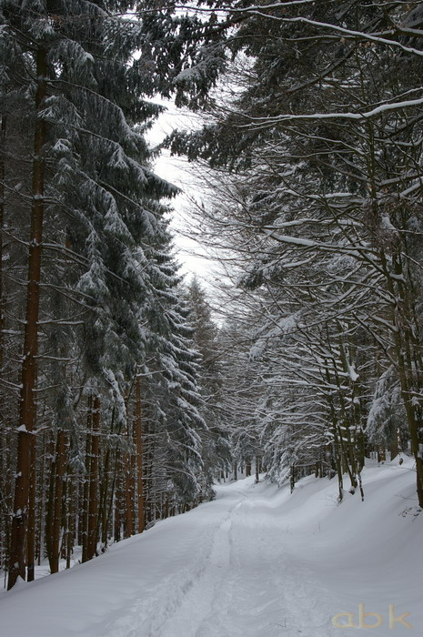 Balade dans la neige Imgp2021