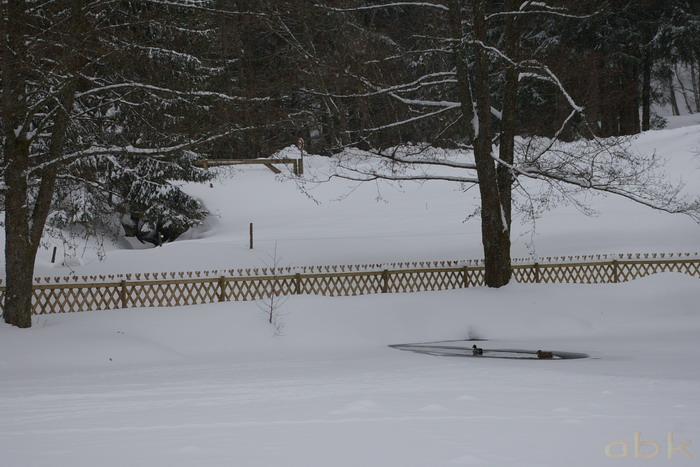 Canards sur un petit étang gelé Imgp2036