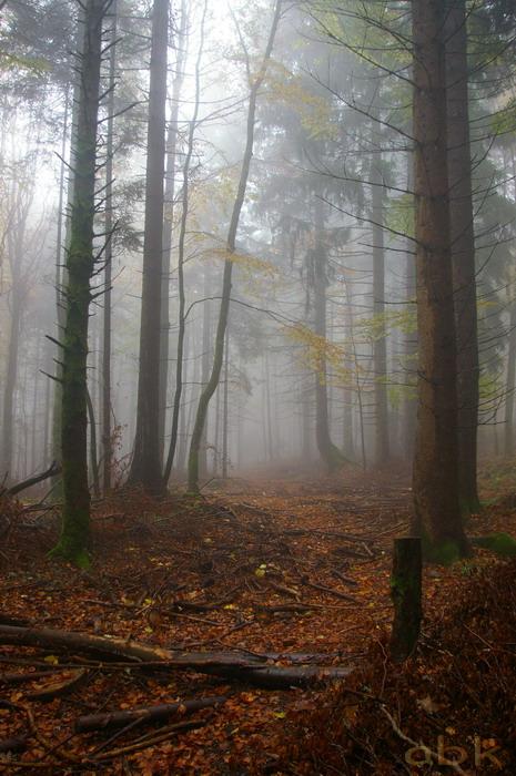 Balade dans le brouillard, sur un versant du champ du feu Imgp2513