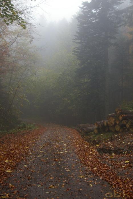 Balade dans le brouillard, sur un versant du champ du feu Imgp2514