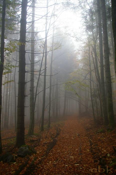 Balade dans le brouillard, sur un versant du champ du feu Imgp2516