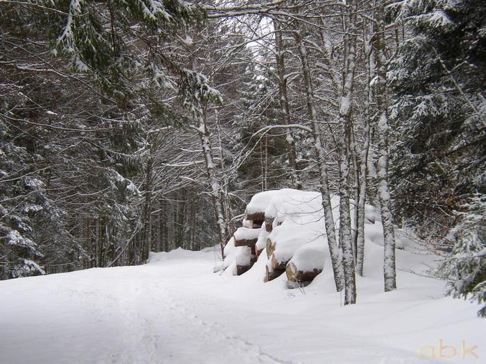 Balade dans la neige P2210010