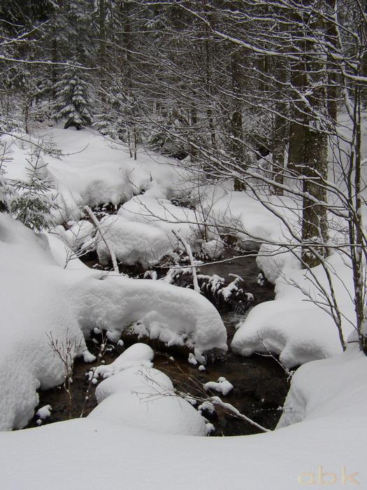 Balade dans la neige P2210011