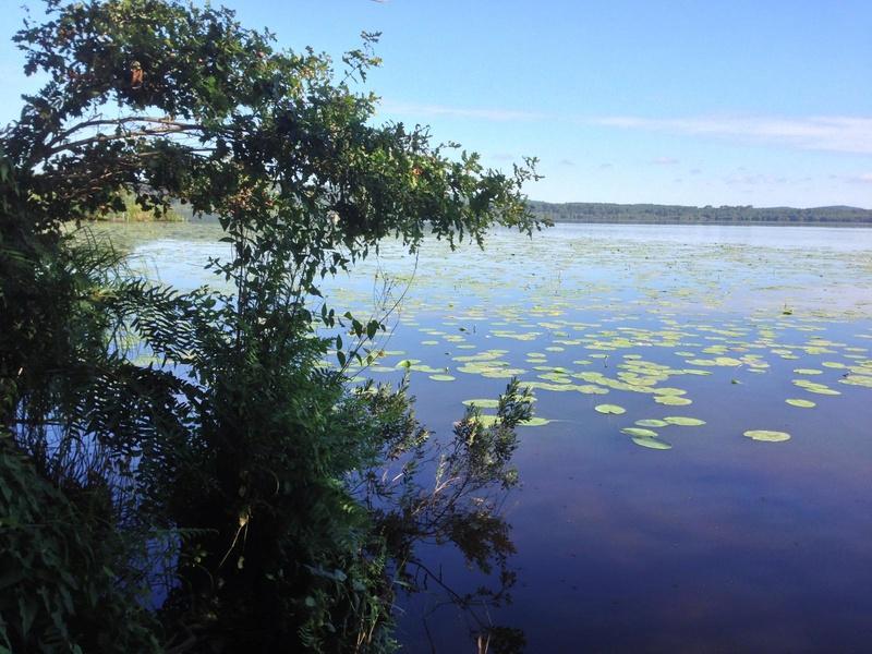 Recherche infos sur le lac Léon dans les Landes  L-etan10