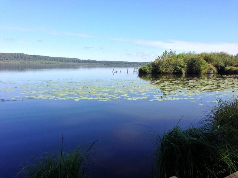 Recherche infos sur le lac Léon dans les Landes  L-etan11