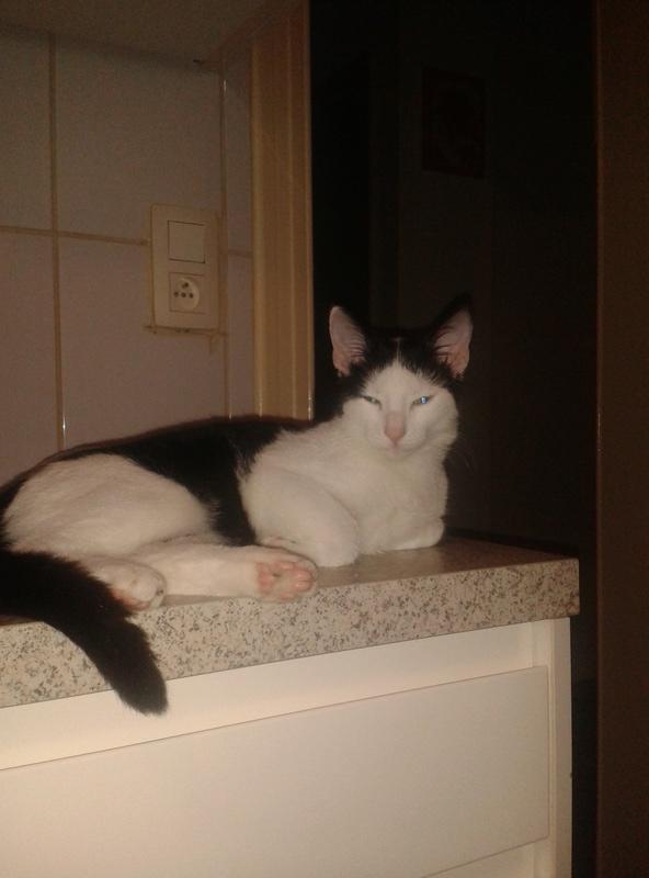 Expérience Sociale: le Chat Miel10