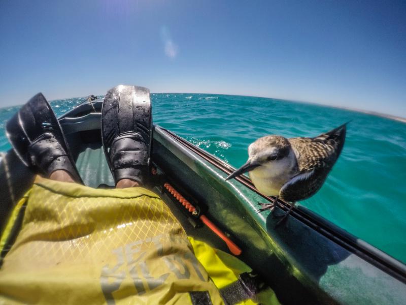 Australie - ocean et rivieres Gopr1410