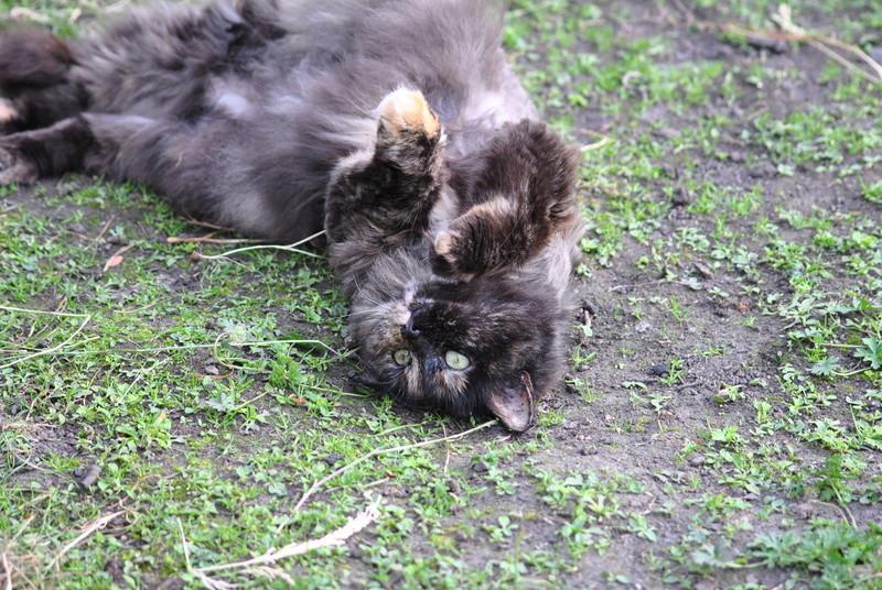 Kitty Cat, née le 1er août 2010 STATUT :CHAT LIBRE - Page 4 Dsc_0028