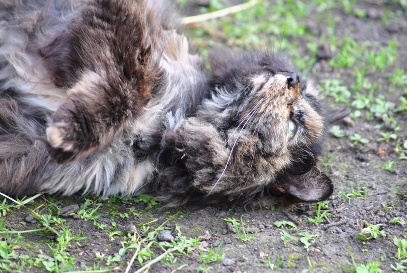Kitty Cat, née le 1er août 2010 STATUT :CHAT LIBRE - Page 4 Dsc_0029