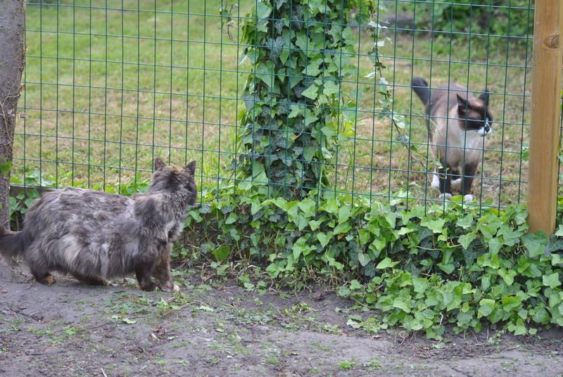Kitty Cat, née le 1er août 2010 STATUT :CHAT LIBRE - Page 4 Dsc_0030