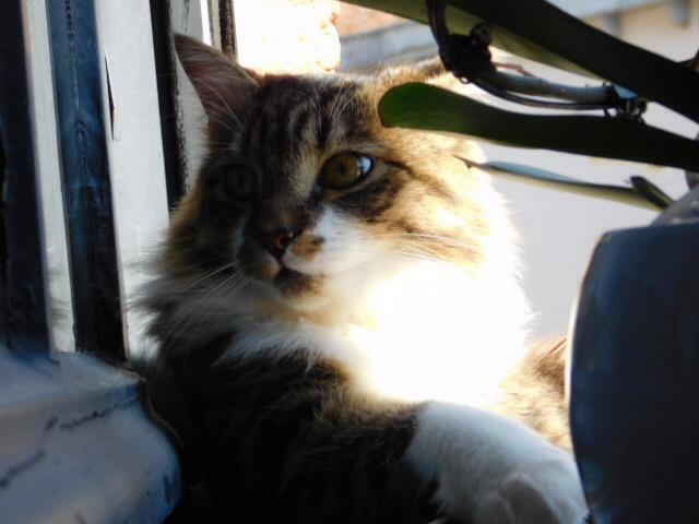 JAMES, rebaptisé TWIX, chaton né en juin 2017 - Page 2 T10