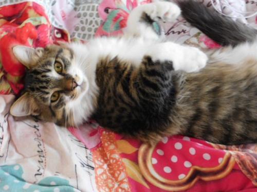 JAMES, rebaptisé TWIX, chaton né en juin 2017 - Page 2 Tww10