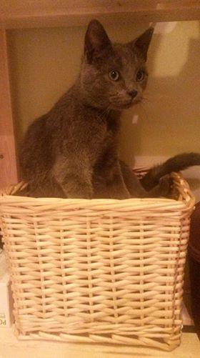 DOBBY chaton trouvé peu avant Noël ! Dob10