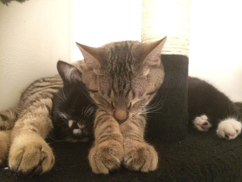 Adoption Spike et Daenerys Img_1710