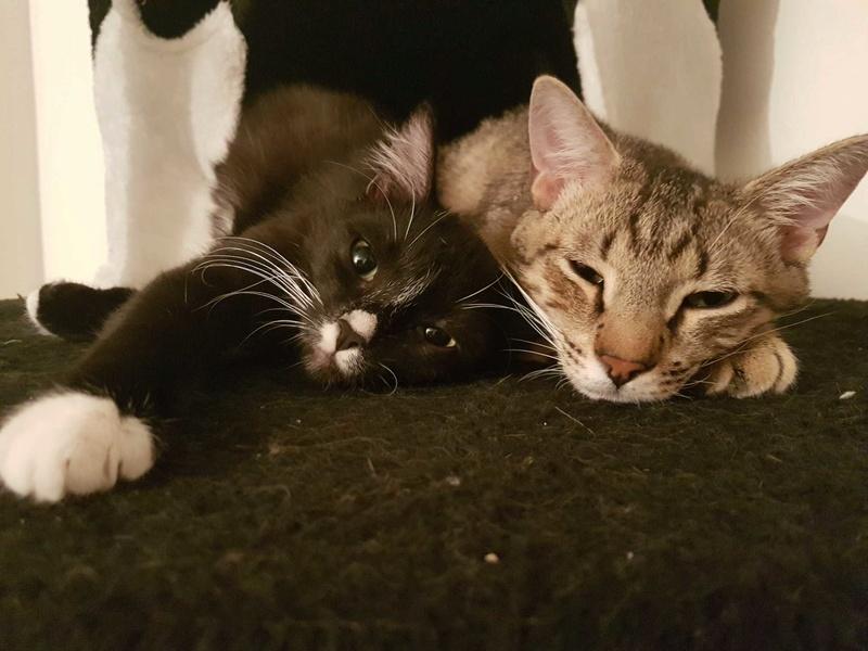 Adoption Spike et Daenerys Img_1811