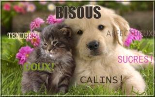Mardi 18 septembre  Bisous16