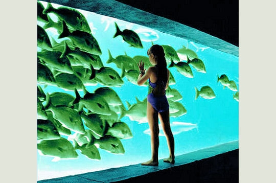 Coucou Aquari10