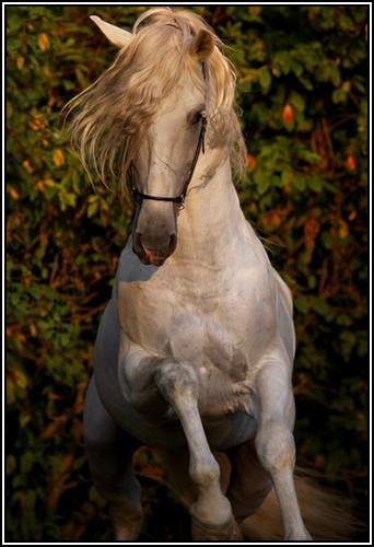 """• Mission """"création de chevaux"""". - Page 2 Furiou10"""