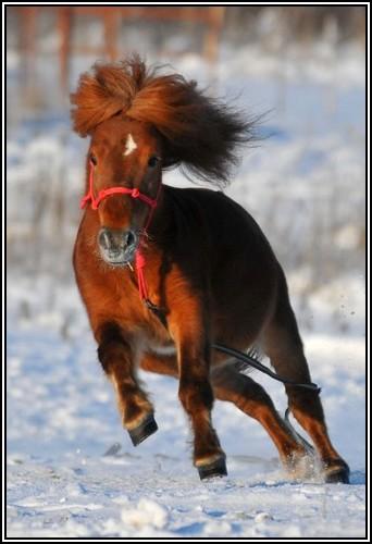 """• Mission """"création de chevaux"""". - Page 3 Invict10"""