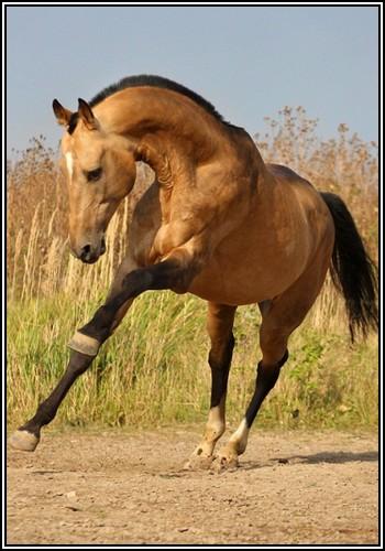 "• Mission ""création de chevaux"". Maybeg10"