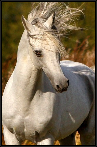 """• Mission """"création de chevaux"""". - Page 3 Qualit11"""