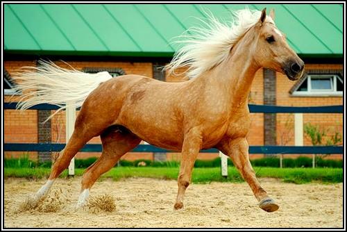 """• Mission """"création de chevaux"""". - Page 3 Reflex10"""