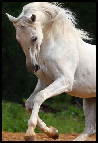 """• Mission """"création de chevaux"""". - Page 2 Revolu10"""