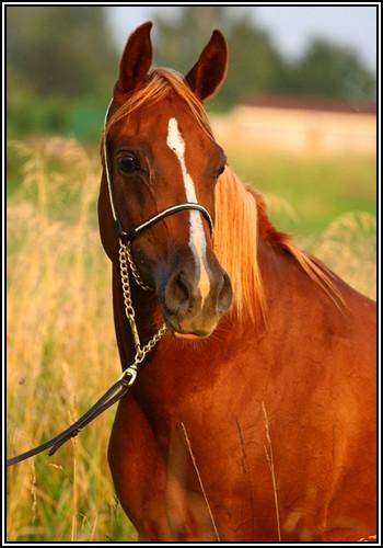 """• Mission """"création de chevaux"""". Showen10"""