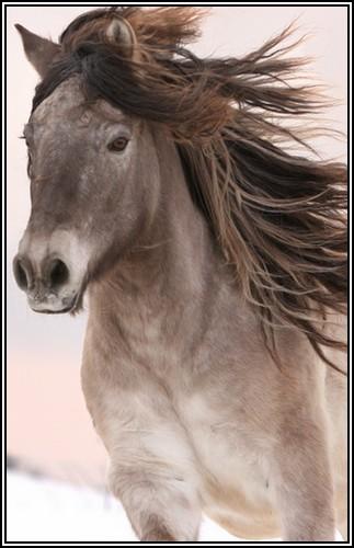 """• Mission """"création de chevaux"""". Venivi10"""