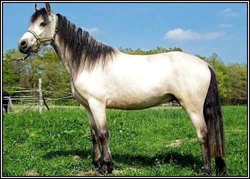 """• Mission """"création de chevaux"""". Waitam10"""