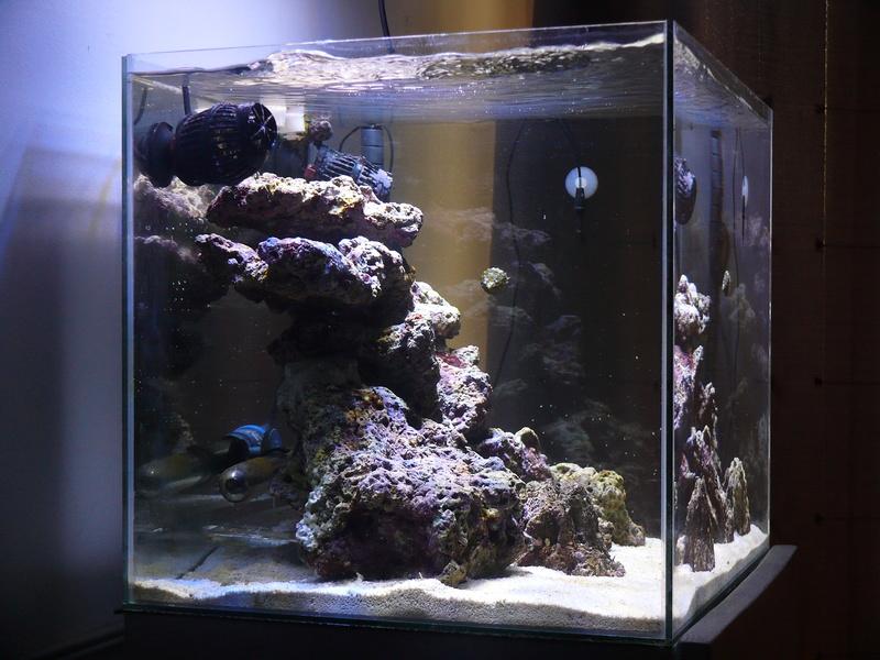 Nano recif de Nonutzz Recifa12