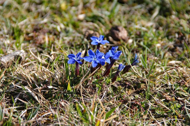 C'est le printemps ! Img_0615