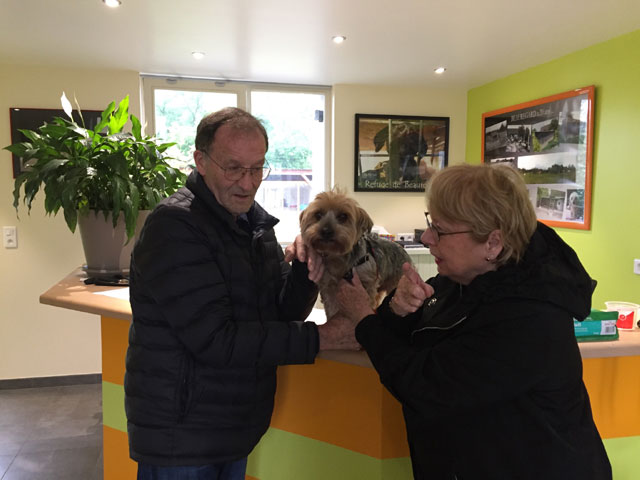 KALI (Yorkshire Terrier) Adopt102