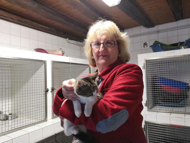 OASIS (Tabby brun et blanc) Adopt115