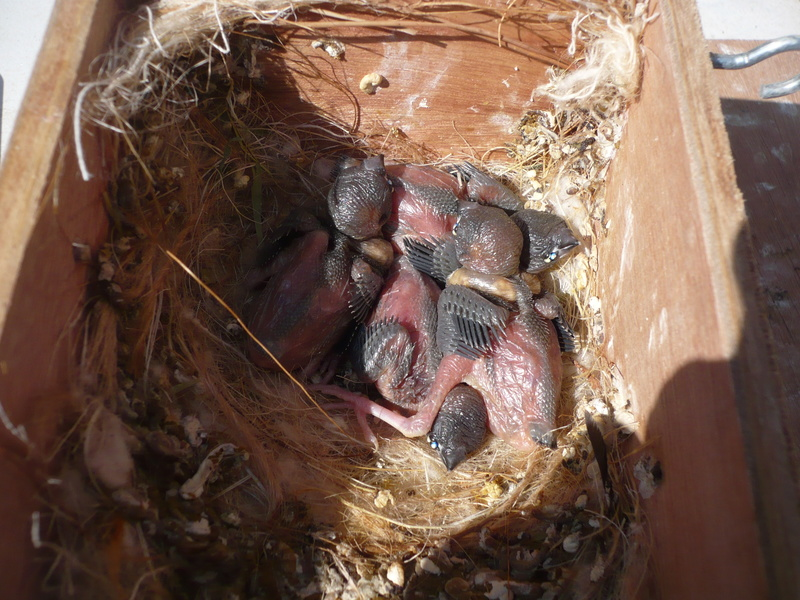 premiers bébé nés en exterieur 00111