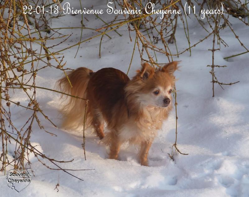 Soeurettes Bruxelle & Bienvenue  15 ans - Page 26 13-01-10