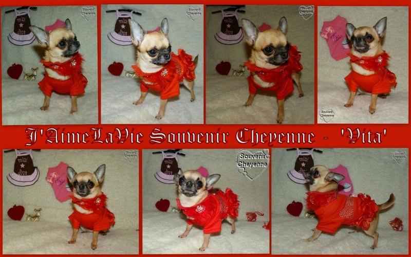 Vita - J'aime La Vie Souvenir Cheyenne - Page 31 Vita_210