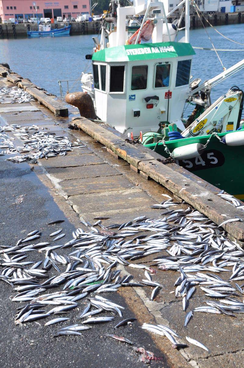 [VIE DES PORTS] Quelques bateaux de pêche (sur nos côtes Françaises) - Page 37 91010