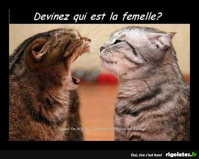 Animaux en Images  - Page 5 20180117